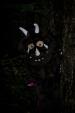 SpookyWalkandDisco-9