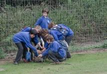 Y6 mauling a wallaby