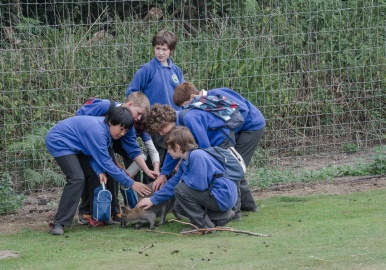 Y6 mauling a wallaby
