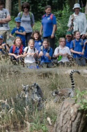 Wildlife in with the lemurs