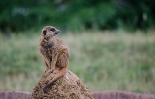 Chester Zoo 2015-023