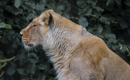 Chester Zoo 2015-036
