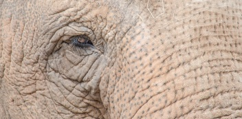 Chester Zoo 2015-037