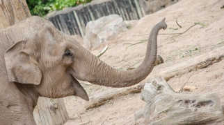 Chester Zoo 2015-043