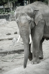 Chester Zoo 2015-051