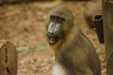 Chester Zoo 2015-067