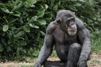 Chester Zoo 2015-098