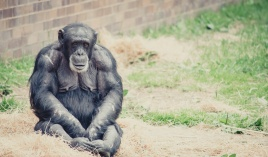 Chester Zoo 2015-101