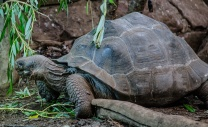 Chester Zoo 2015-104