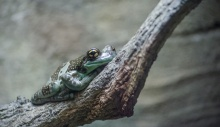 Chester Zoo 2015-112
