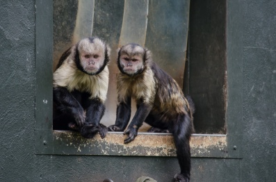 Chester Zoo 2015-122