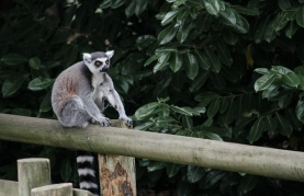 Chester Zoo 2015-123