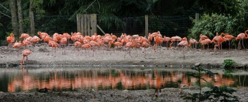Chester Zoo 2015-127