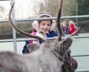 reindeer2016-040