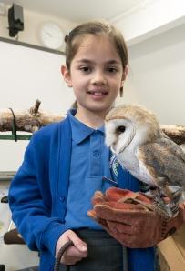 Owls003