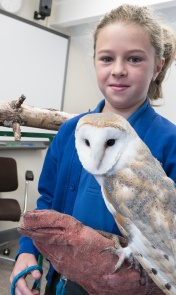 Owls006