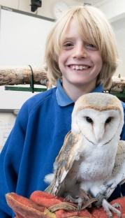 Owls007