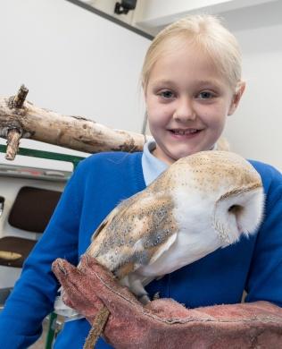 Owls020