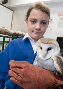 Owls024