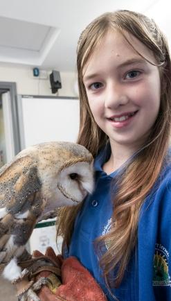Owls035