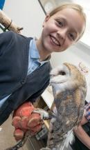 Owls039