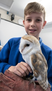 Owls040