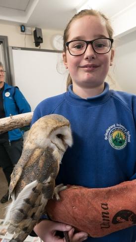 Owls044