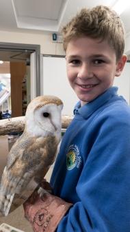 Owls046
