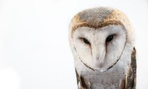 Owls067