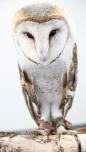 Owls070