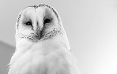 Owls083