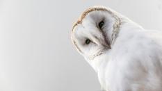 Owls093