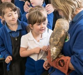 Owls101