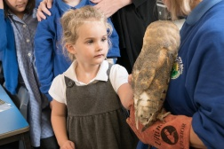 Owls102