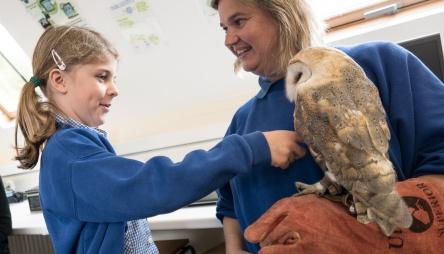 Owls107