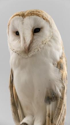 Owls127