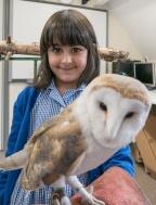 Owls135