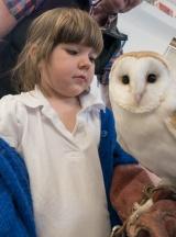 Owls141