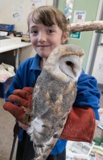 Owls144