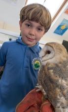 Owls146
