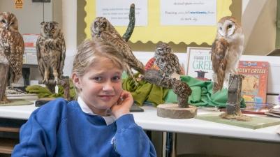 Owls152