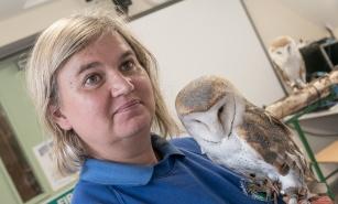 Owls162