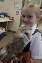 Owls177