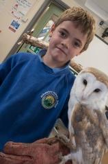 Owls178