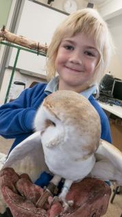 Owls181