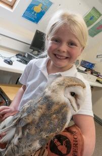 Owls182