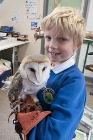 Owls184