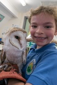 Owls194