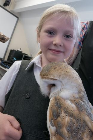 Owls196