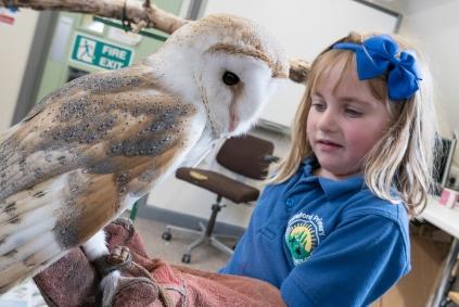 Owls199